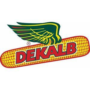 DEKALB-4943 50MK